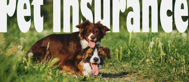 5 Benefits of Having Pet Insurance